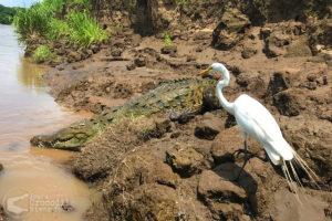 Crocodiles and birds galore!