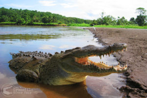 Crocodiles, exotic birds, beautiful river scenery, and more!