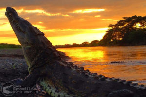 Beautiful sunset and huge crocodile / Photographer: Jose Eduardo Chaves