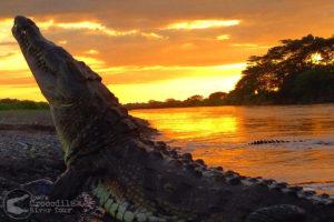 Beautiful sunset and huge crocodile / Photographer: Jose Eduardo Chaves