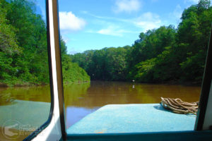 Mangrove forest canal